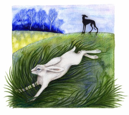 the white Hare - Tyrone
